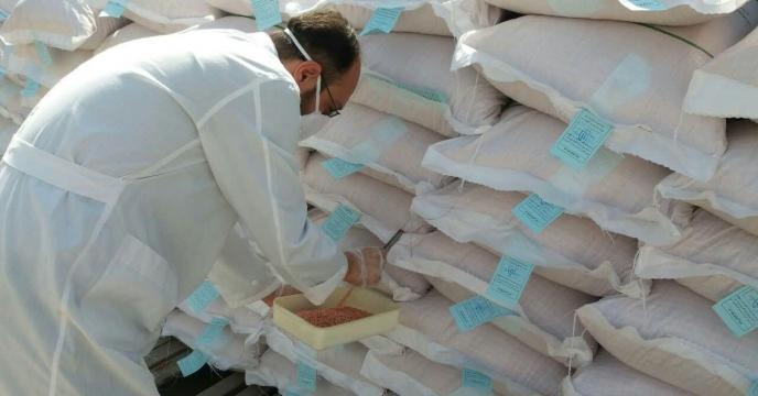 عملیات نمونه برداری از انواع بذور در حال بوجاری ( بذر گندم اروم مادری و گواهی شده )