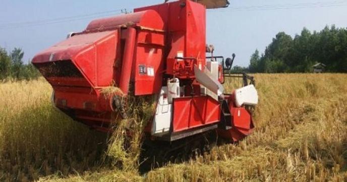 برداشت برنج در 2200 هکتار از شالیزارهای تنکابن استان  مازندران