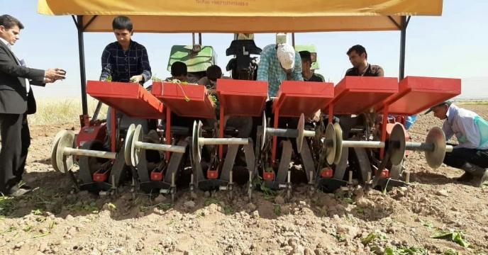برگزاری روز مزرعه کشت نشایی چغندر قند در اراضی کشاورزی شهرستان آبیک