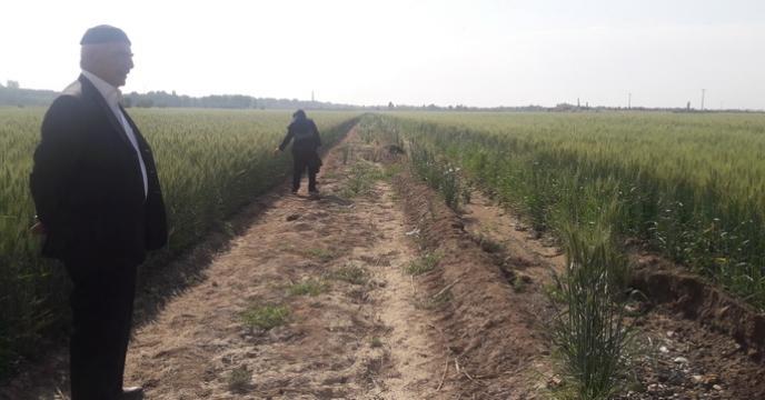 گزارش بازدید از مزارع پیمانکاران تولید بذر استان تهران