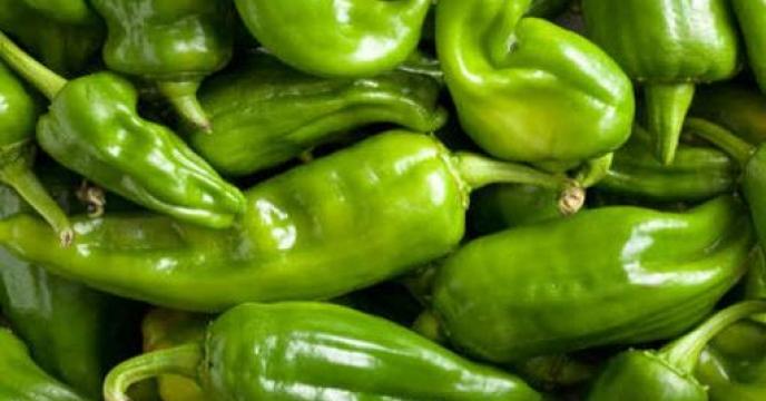 تامین کود برای 57 هکتار مزارع فلفل در جویبار