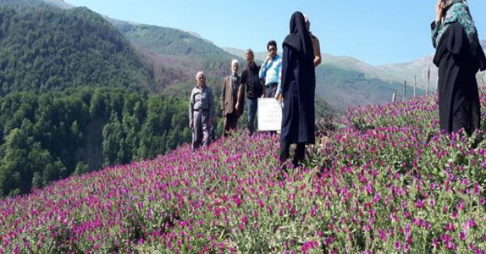 دوره آموزشی مهارتی گیاهان دارویی در مازندران