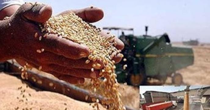خرید تضمینی گندم در 5 مرکز خرید دولتی در استان البرز