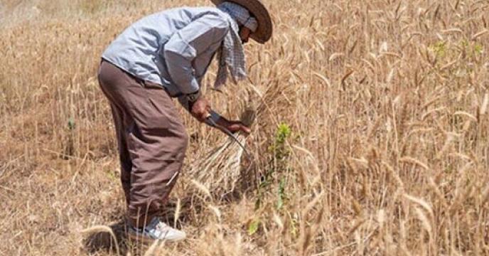 خرید تضمینی ۷۰۰۰ تن گندم از کشاورزان خراسان جنوبی
