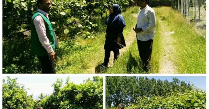 آزمون خاک و گیاه به منظور استفاده بهینه کود شیمیایی و تعذیه مناسب در ختان