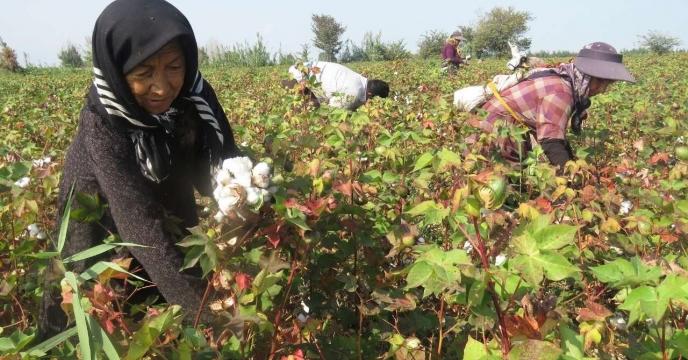 زیرساختهای جهش تولید در بخش کشاورزی گلستان بهبود مییابد