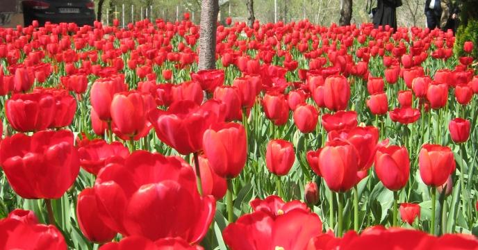 تولید گل و گیاهان زینتی در شهرستان نظرآباد