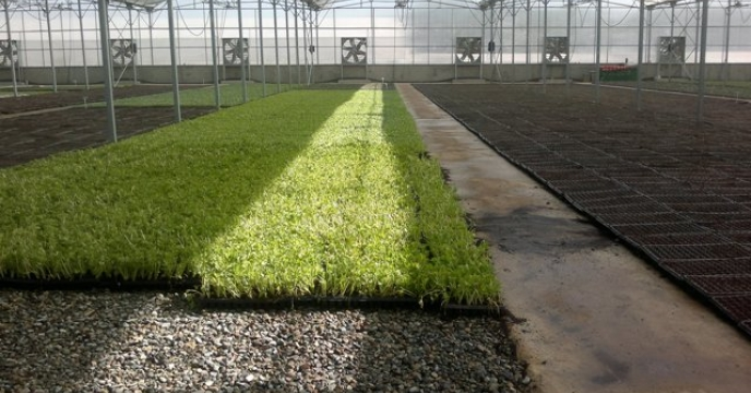 کشت محصولات گلخانه ای در شهرستان فردیس