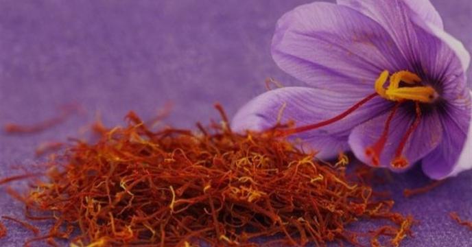 پیش بینی تولید بیش از هزار و ۸۰۰ کیلوگرم زعفران در گلستان