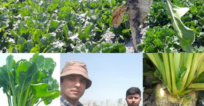 توزیع کود ریز مغذی در سبد کودی غیر یارانه ای شرکت خدمات حمایتی کشاورزی استان گلستان