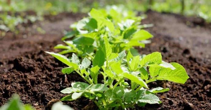 افزایش کیفی تولیدات مهمترین نیاز حوزه کشاورزی
