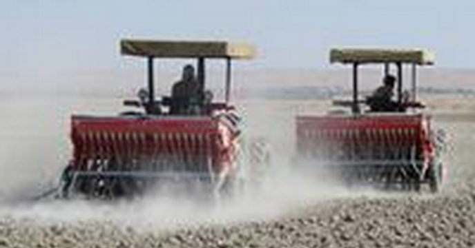 کاشت دانه روغنی کلزا در استان آغاز شد