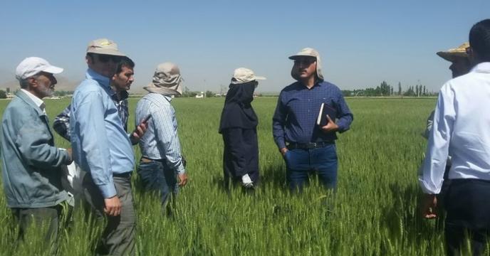 بازدید مزارع جو در استان مرکزی