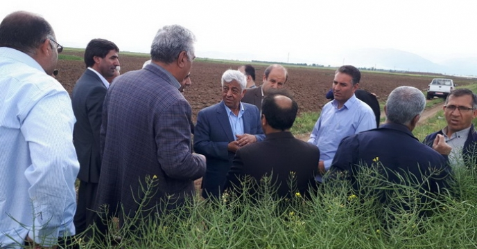 بازدید معاونت وزیر جهاد کشاورزی از مزرعه کلزا دراردبیل