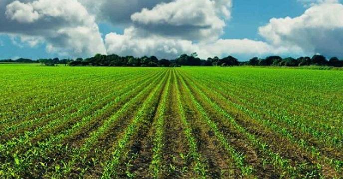 احياي 100 هزار هکتار از اراضی کشاورزی ایلام
