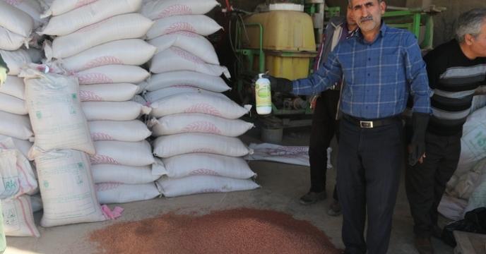 مرحله دوم عملیات کاشت مزارع طرح الگویی تغذیه گیاهی