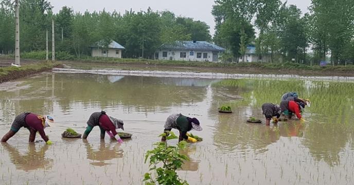 صالح محمدی مدیر شرکت خدمات حمایتی کشاورزی استان گیلان از بازدید کارشناسان بذر با پیمانکاران طرف قرارداد شرکت خبر داد