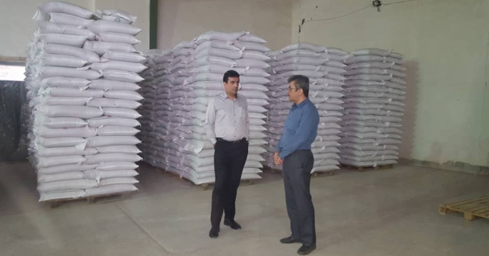 بازدید جناب آقای مهندس مسعودی فر مدیر محترم فنی و بهبود کیفیت بذر و نهال از وضعیت فراوری گندم بذری در استان هرمزگان
