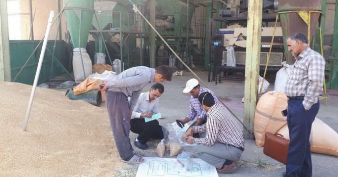 عملیات نمونه برداری محموله های بذری گندم و جو در استان مرکزی