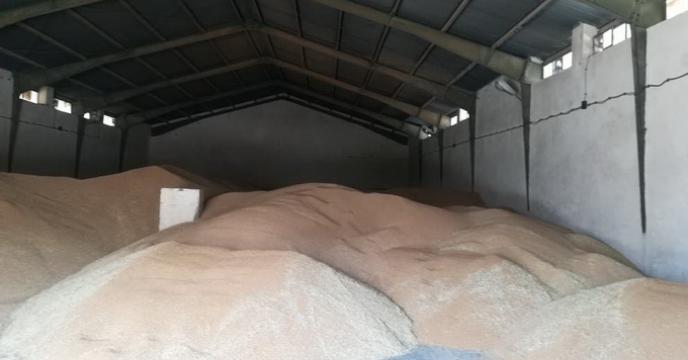 گزارش مصور اتمام عملیات خرید گندم بذری از مزارع تکثیری هرمزگان