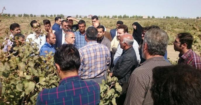 جلسه آموزشی مبارزه با آفات و تغذیه درختان پسته پس از برداشت