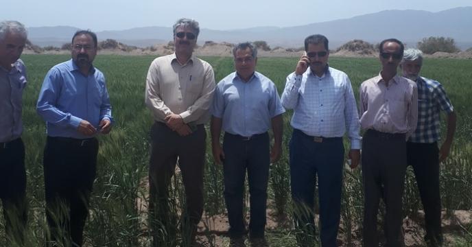 بازدید از مزارع تکثیر بذر استان کرمان