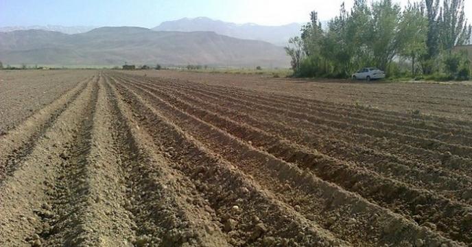 کشت پاییزه  در استان سمنان