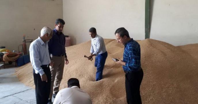 گزارش مصور نمونه برداری از بذور گندم خریداری شده از مزارع تکثیری بذر