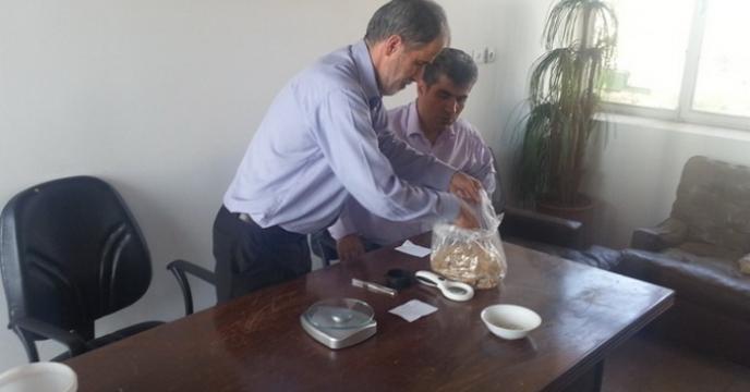 تجزیه ی بذر برنج در استان گیلان