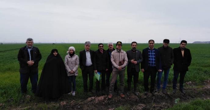 نظارت کارشناسان کمینه فنی گندم استان بر عملیات مصرف کود در پایلوت تغذیه ای گندم درگلستان