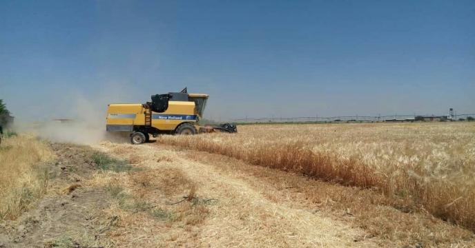 خریدار توافقی مازاد گندم از کشاورزان پس از ثبت در سامانه