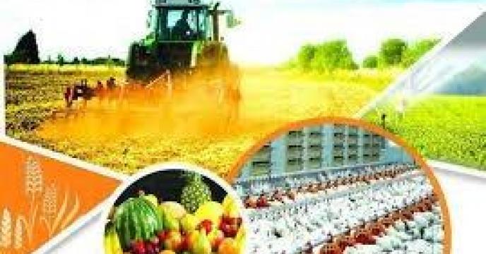 تولید سالانه 7 میلیون تن محصولات کشاورزی در  استان مازندران