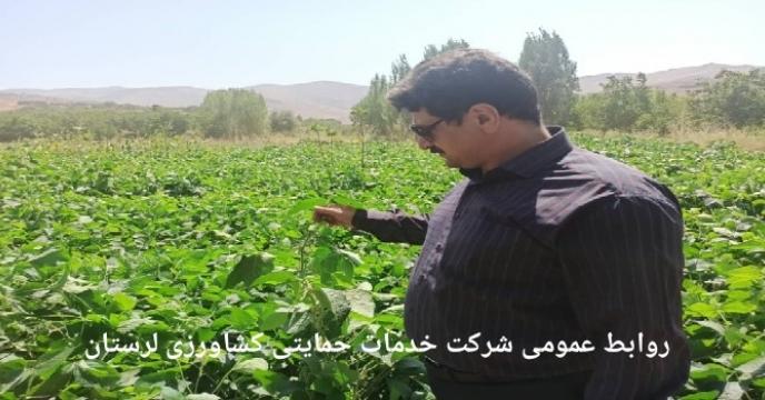 توزیع میزان 10 تن کود شیمیایی سوپر فسفات تریپل  از انبار ذخیره مرکزی به مقصد انبار کارگزاران شهرستان نور آباد در استان لرستان
