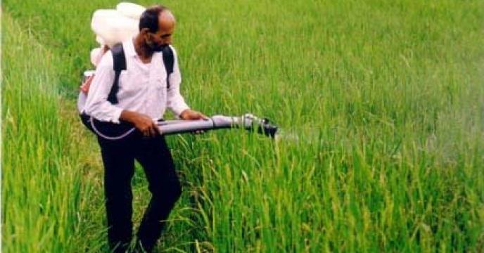 مبارزه با آفت ساقه خوار برنج در 7200 هکتار از شالیزارهای نکاء استان مازندران