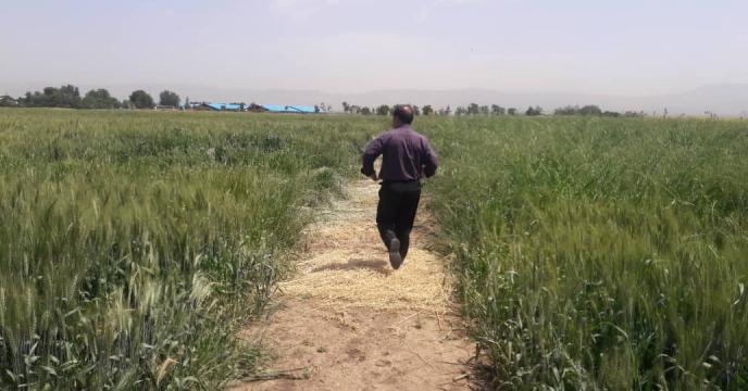 بررسی وضعیت سبز مزرعه طرح پایلوت تغذیه گیاهی استان قزوین