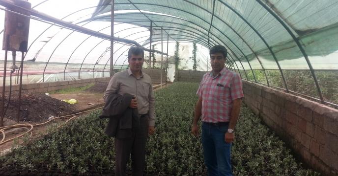 بازدید از گلخانه تولید نهال زیتون در استان گیلان