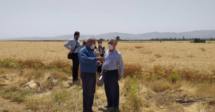 خرید گندم در استان آذربایجان شرقی از مرز 157 هزار تن گذشت
