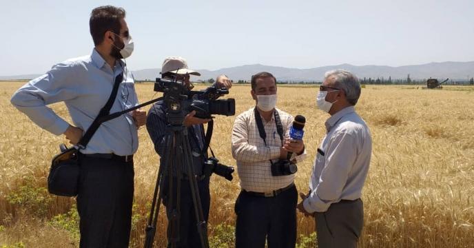 عملیات برداشت گندم مزرعه طرح پایلوت تغذیه کودی گندم  استان آذربایجان شرقی