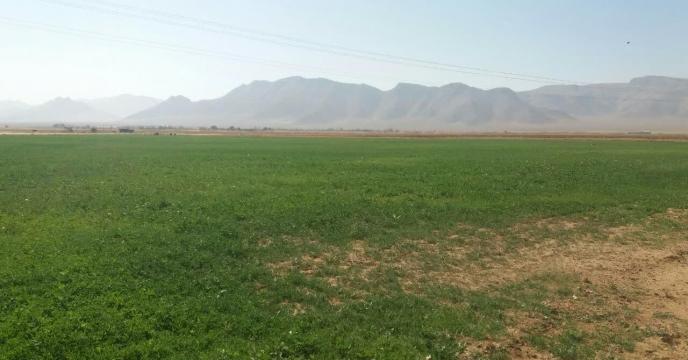 بازدید از مزرعه پایلوت تغذیه ای گندم اسفند ماه سالجاری در استان مرکزی
