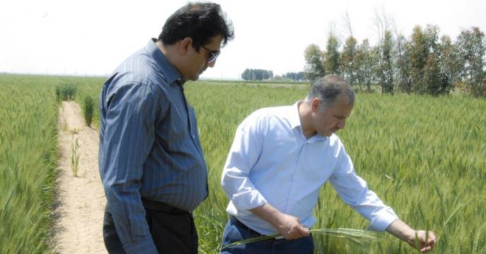 حضور مدیر فنی و بهبود کیفیت بذرونهال در مراسم روز مزرعه در شهرستان ورامین
