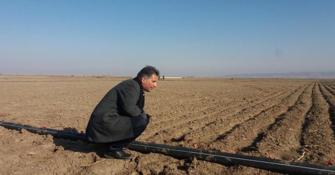 کنترل و نظارت مستمر بر پایلوت تغذیه گیاهی گندم، استان خراسان رضوی