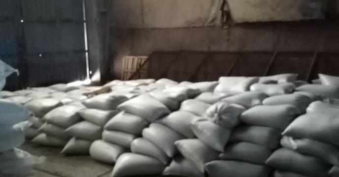 اتوماسیون قوی و پاسخ به نیازهای کشاورزان، شرکت های تولید کننده  در فرآوری بذر کلزا در گلستان