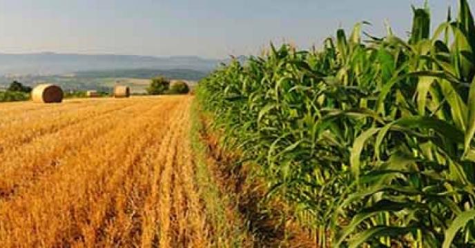 نبود نگاه استراتژیک حوزههای درون و برون سازمانی به بخش کشاورزی