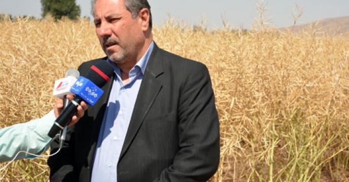 برنامه ریزی جهت خودکفایی در تولید بذر کلزای موردنیاز کشور