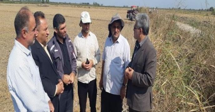 سایت الگویی آموزش و ترویجی کلزا در نکا استان مازندران