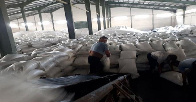 توزیع 15 تن کود سولفات پتاسیم ازطریق تعاونی تولید در محموداباد