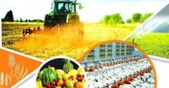تولید 72 محصول کشاورزی در مازندران