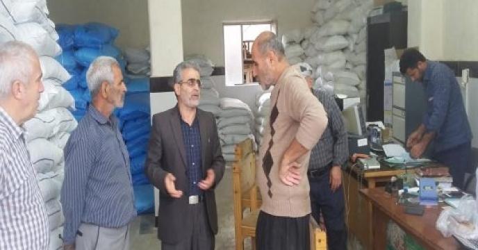 توزیع 2300 کیلوگرم بذر کلزا در میاندرود مازندران