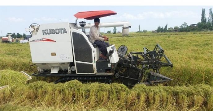 تامین کود برای 562 هکتار پرورش رتون برنج درمحمودآباد