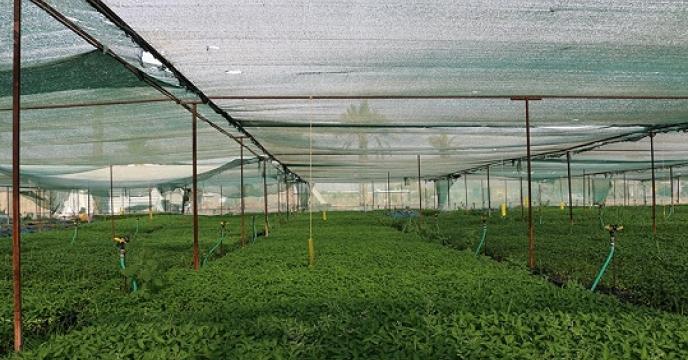 تامین کود برای 561 هکتار سبزی کاری در نور استان مازندران